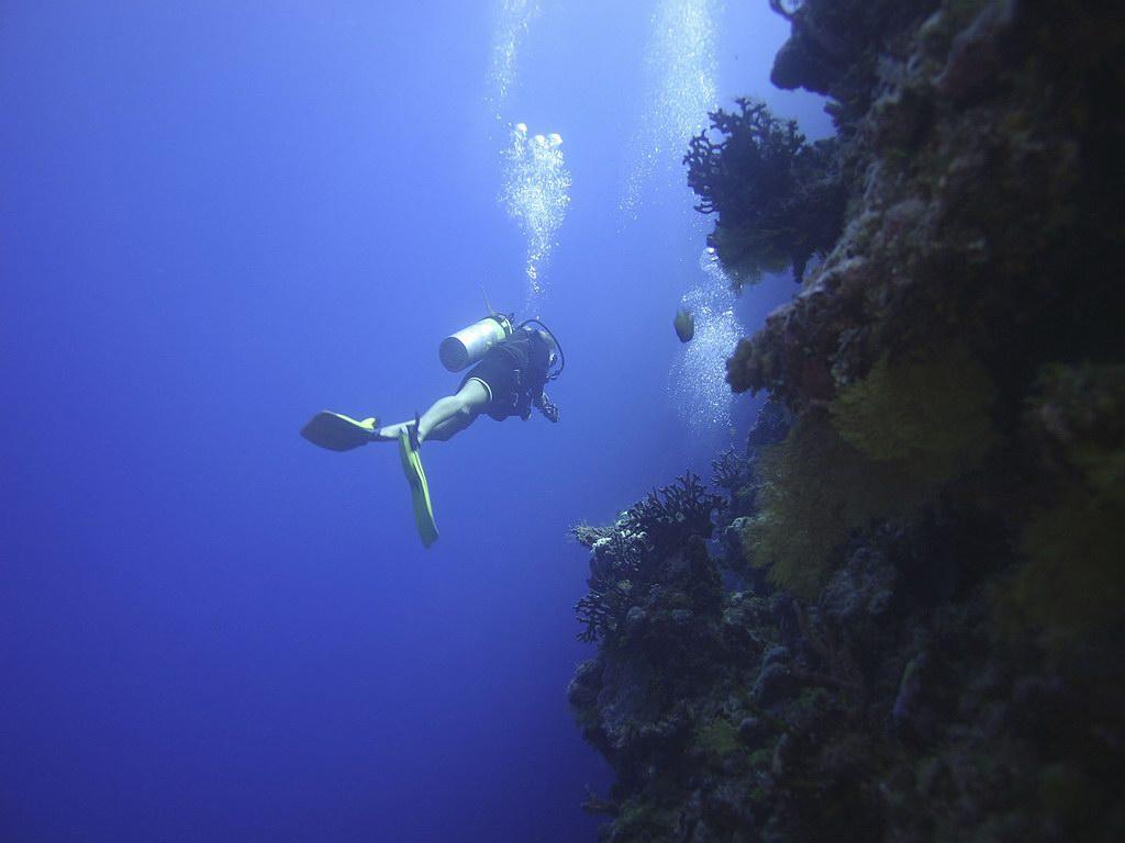 underwater-photos-4