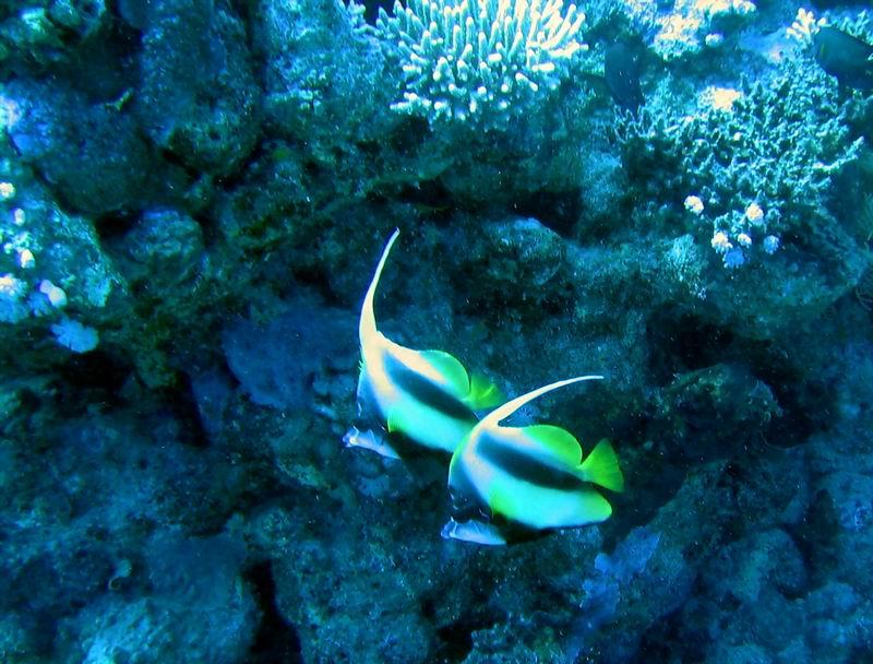 underwater-photos-45