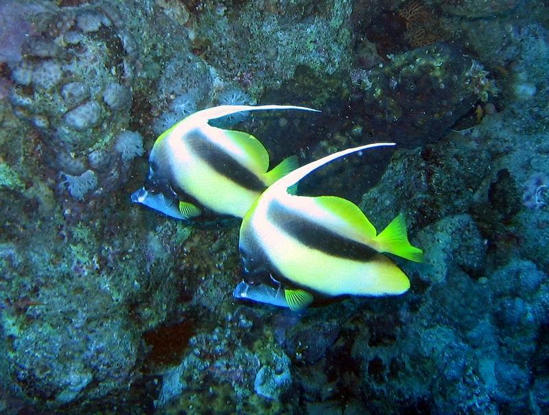 underwater-photos-46