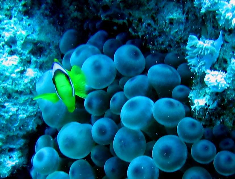 underwater-photos-48