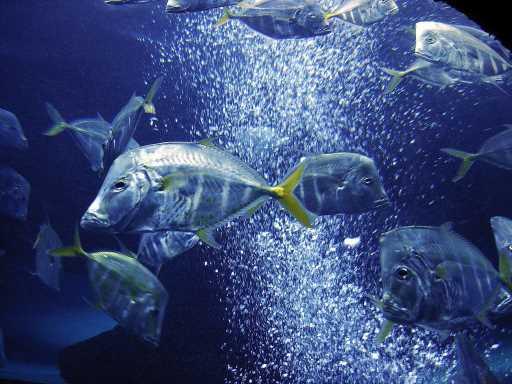 underwater-photos-5