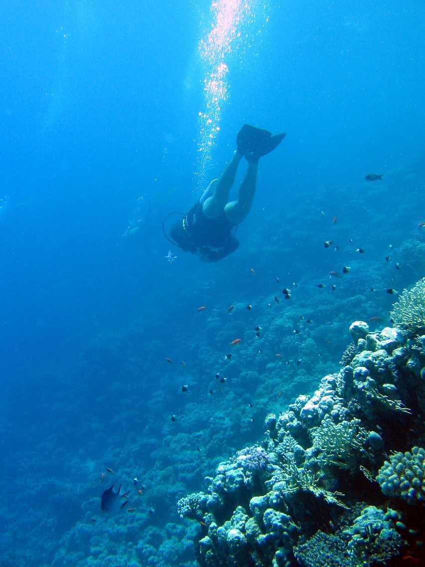 underwater-photos-52