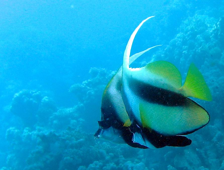 underwater-photos-53