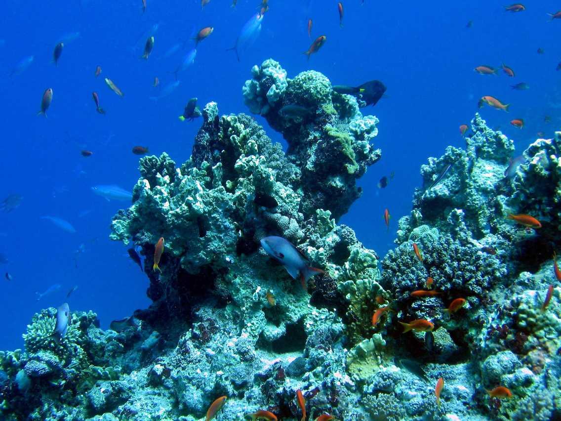 underwater-photos-57