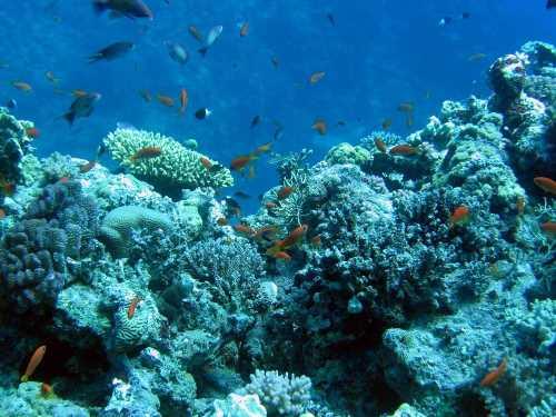 underwater-photos-59