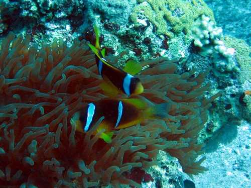 underwater-photos-60
