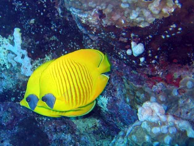 underwater-photos-65