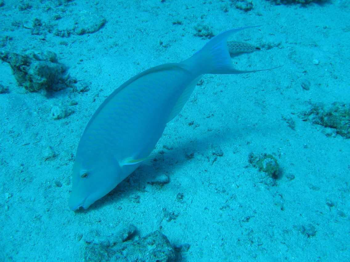 underwater-photos-66