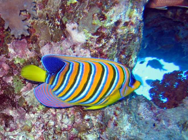 underwater-photos-67