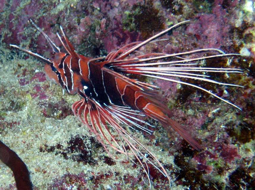 underwater-photos-68