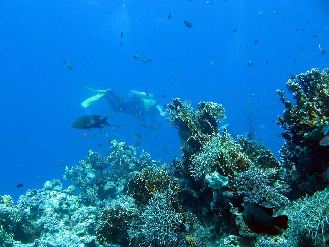 underwater-photos-73