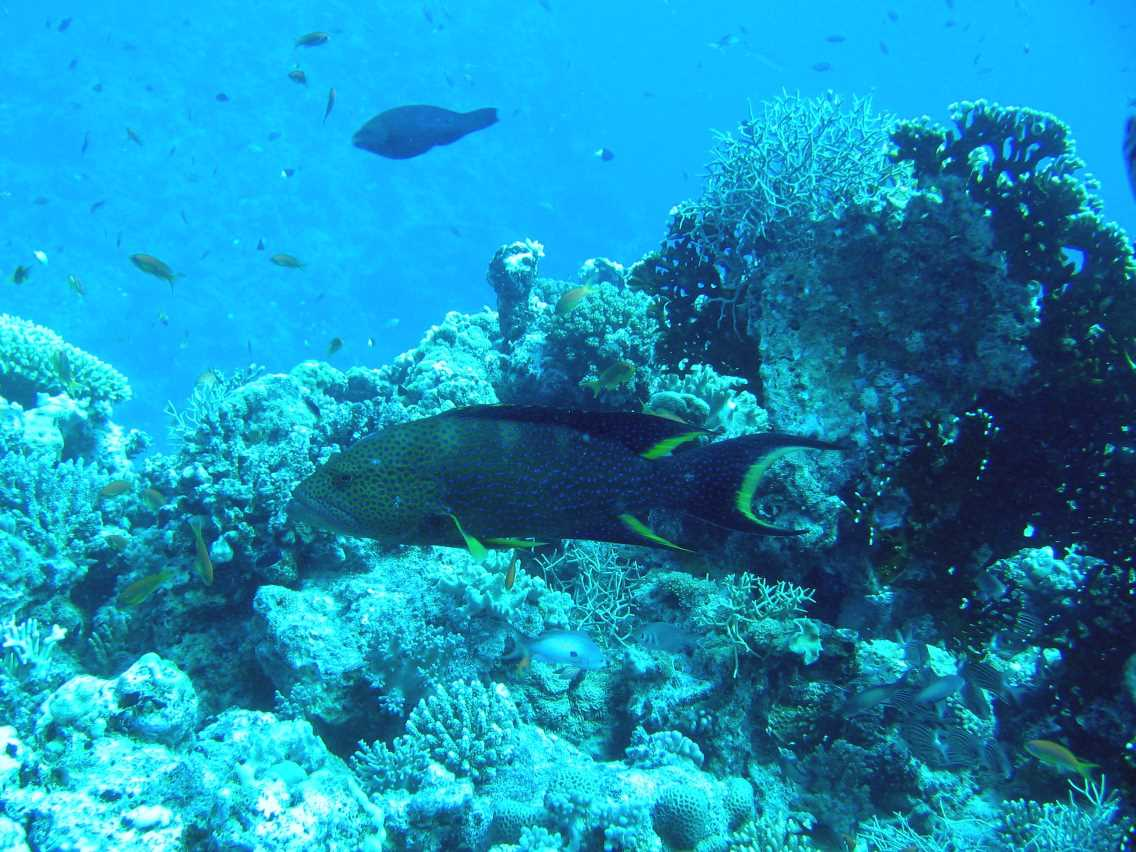 underwater-photos-75