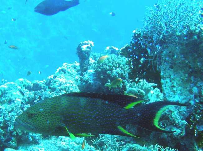 underwater-photos-76