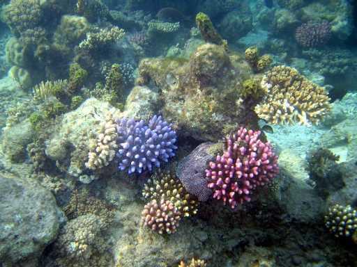 underwater-photos-78