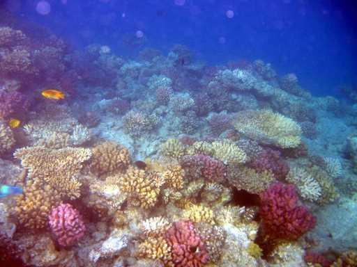underwater-photos-79