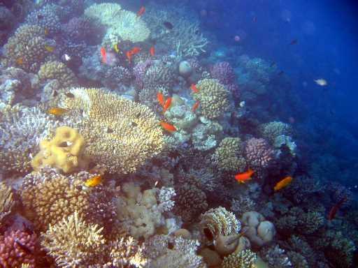 underwater-photos-80
