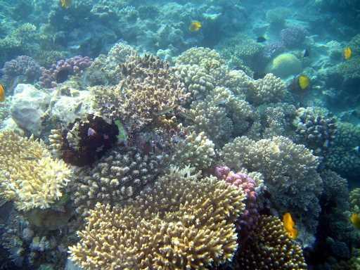 underwater-photos-81