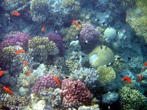 underwater-photos-82