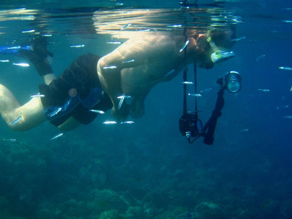underwater-photos-83