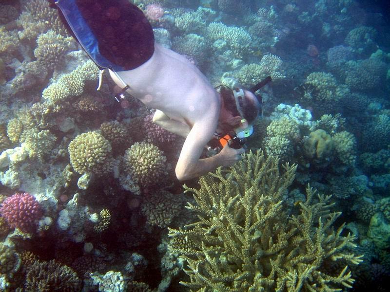 underwater-photos-84