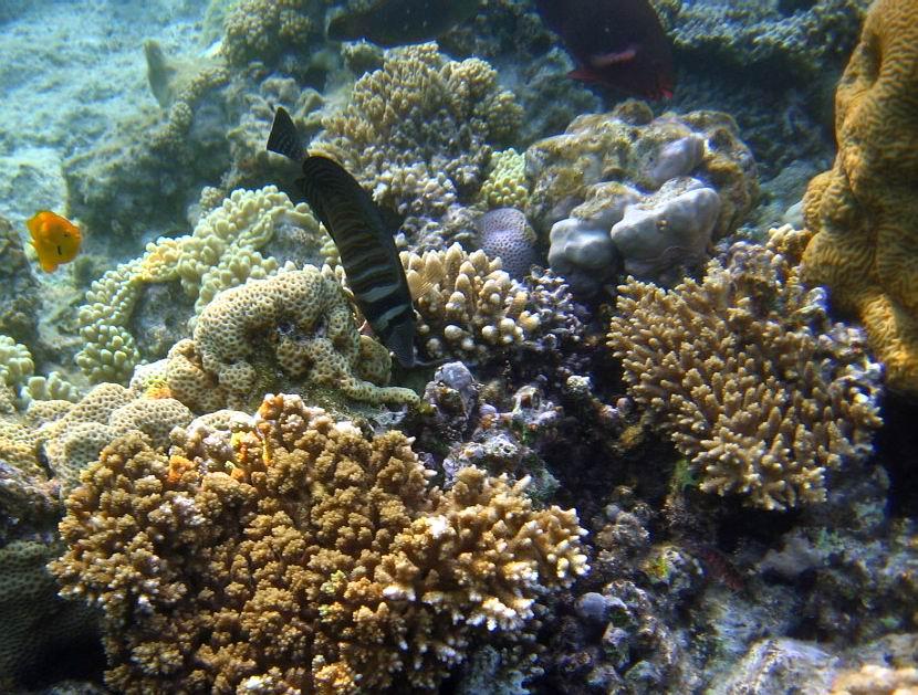 underwater-photos-87