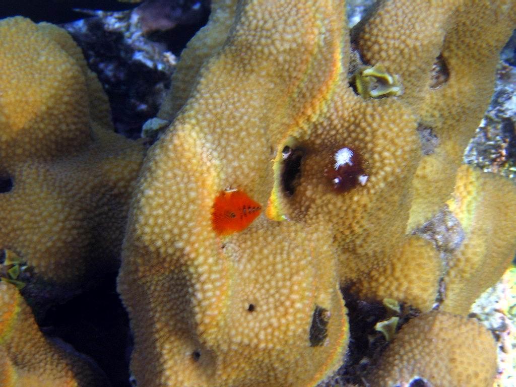 underwater-photos-88