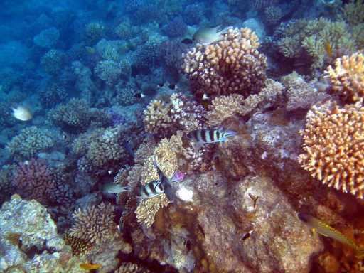underwater-photos-91