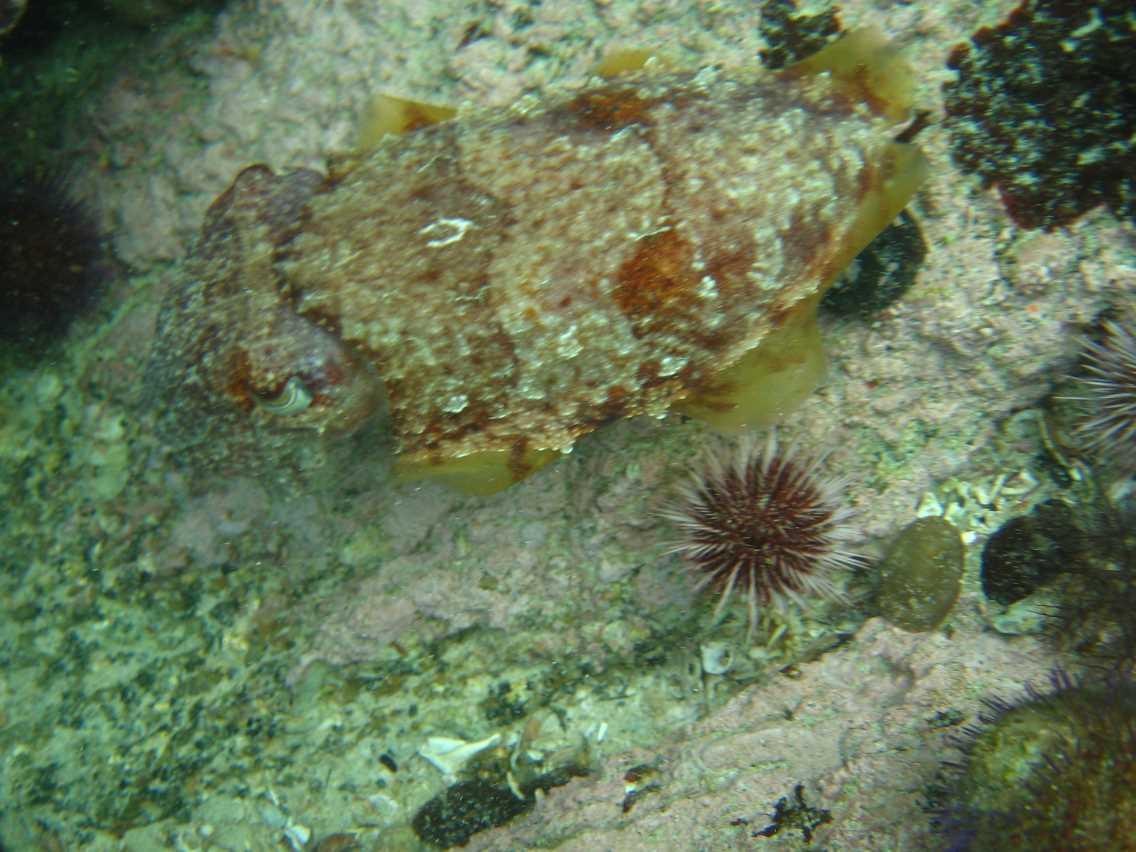 underwater-photos-95